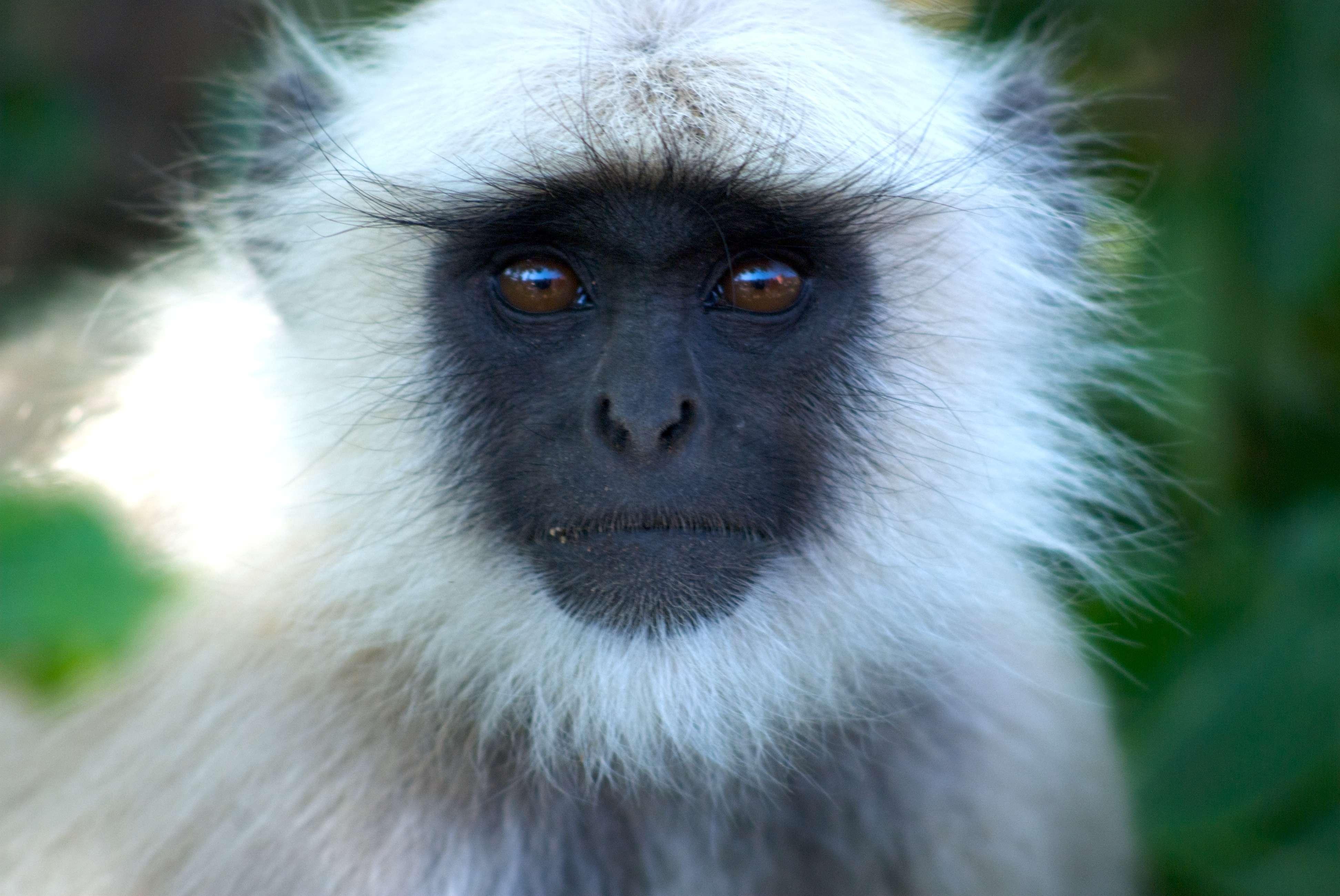 Секс фото человека с обезьяной 18 фотография