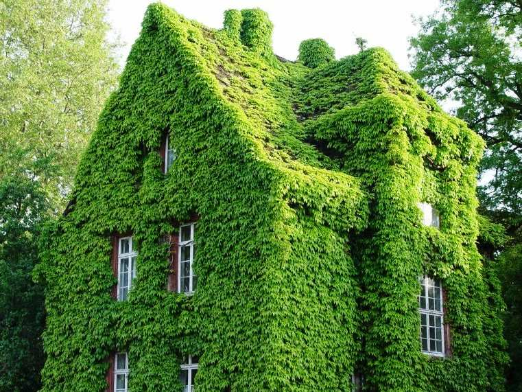 Eco Friendly Home Technology: Now Design Your Green Home | Business Insider  India