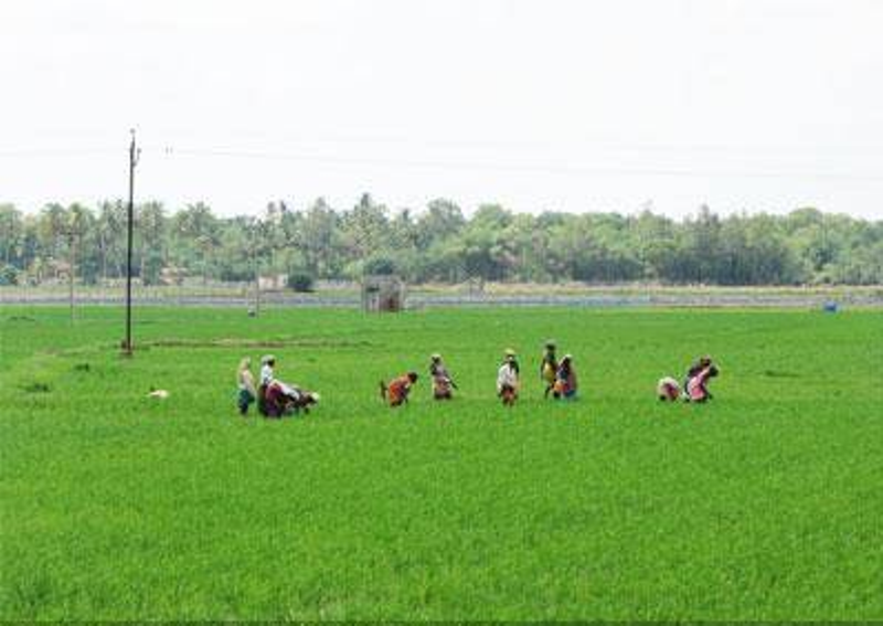articles on agriculture sector in india