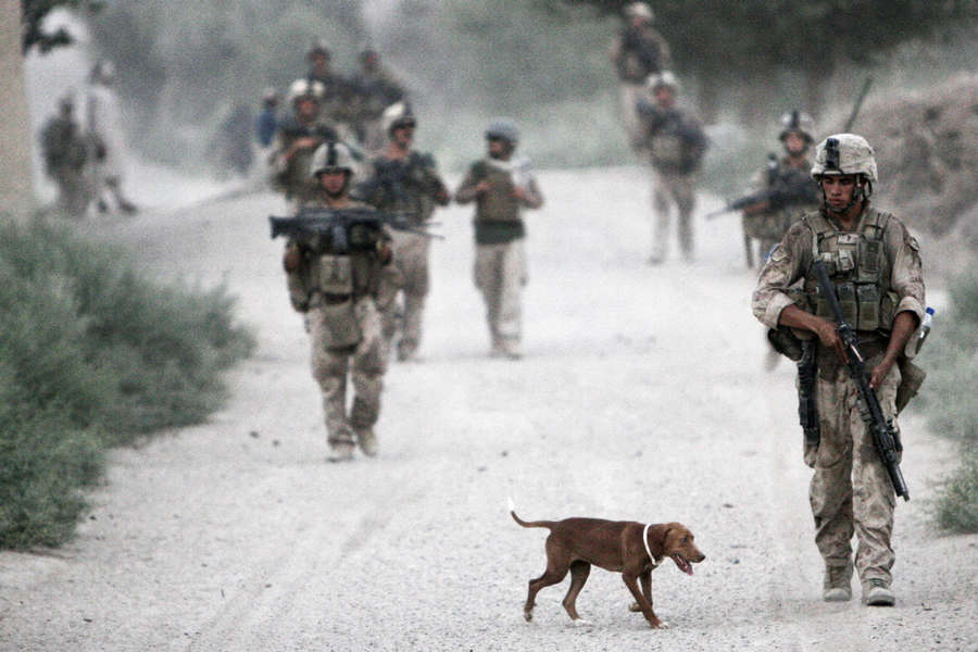 http://www.businessinsider.in/photo/51785641/20-things-you-never-knew-about-americas-war-dogs/Dogs-were-mostly-used-as-message-carriers-during-the-first-few-conflicts-.jpg