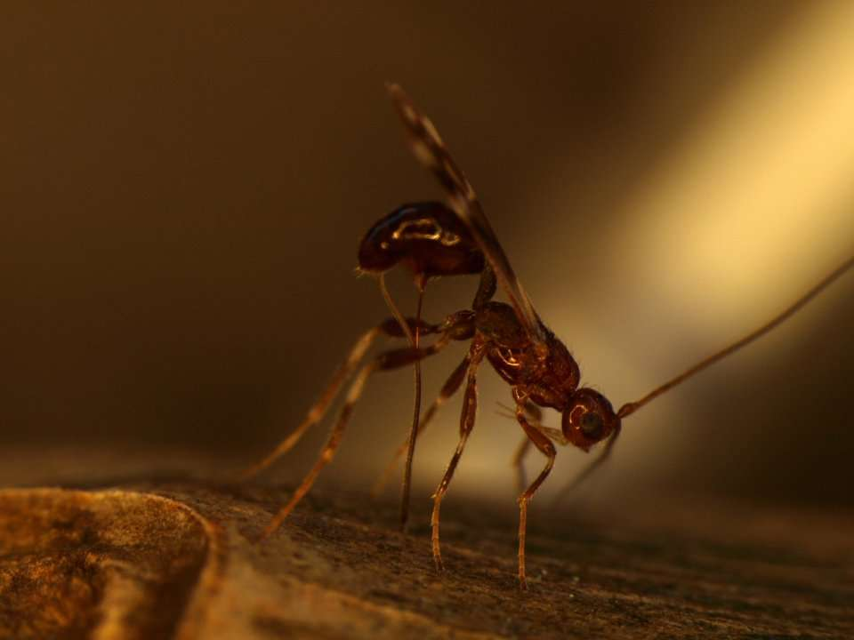 The government is releasing millions of parasitic wasps across 24 states   Business Insider India