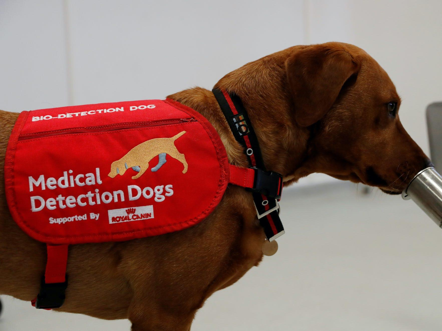 Dogs are capable of detecting cancer