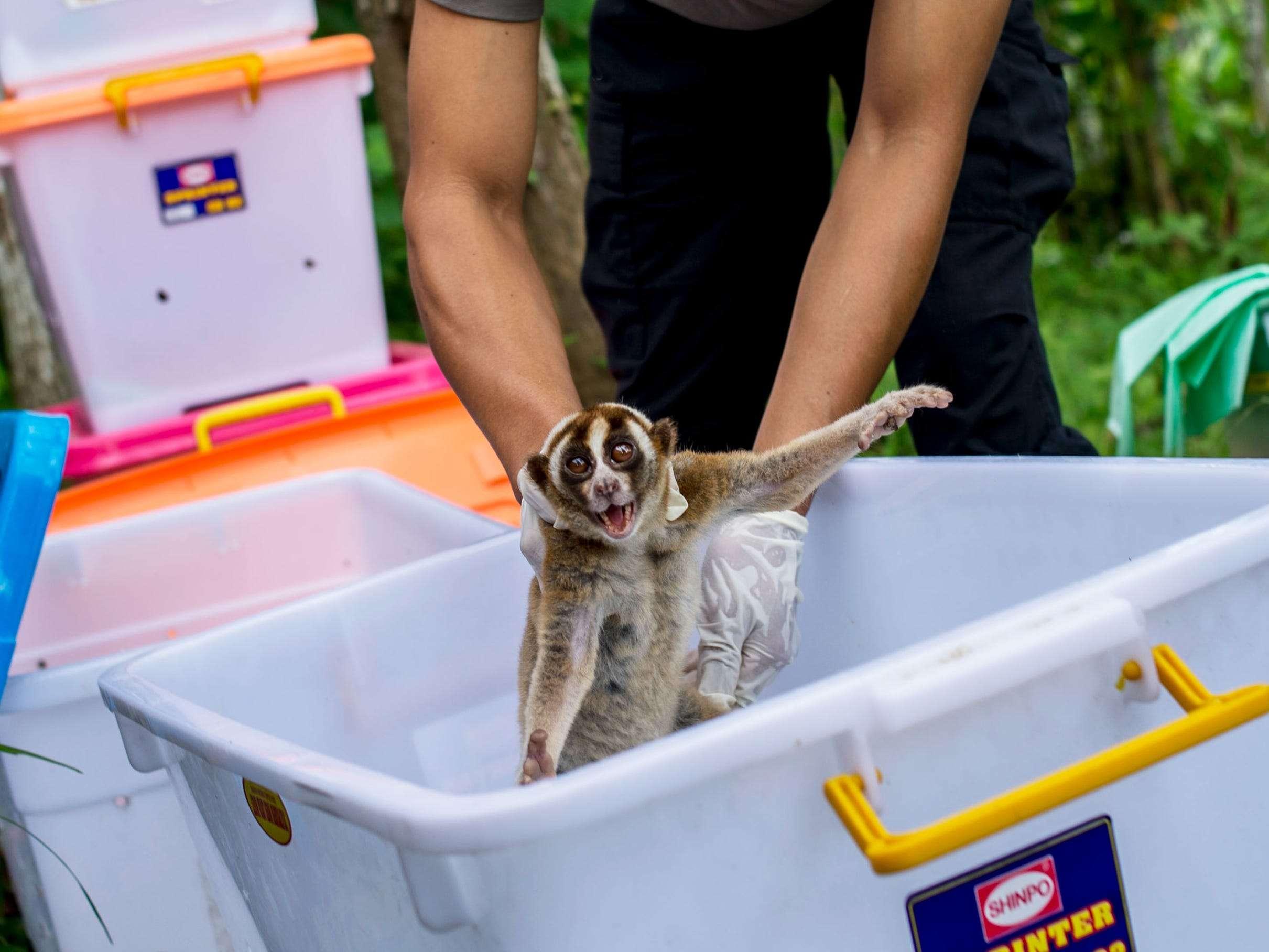 Tiktok Has An Exotic Animal Problem Insider