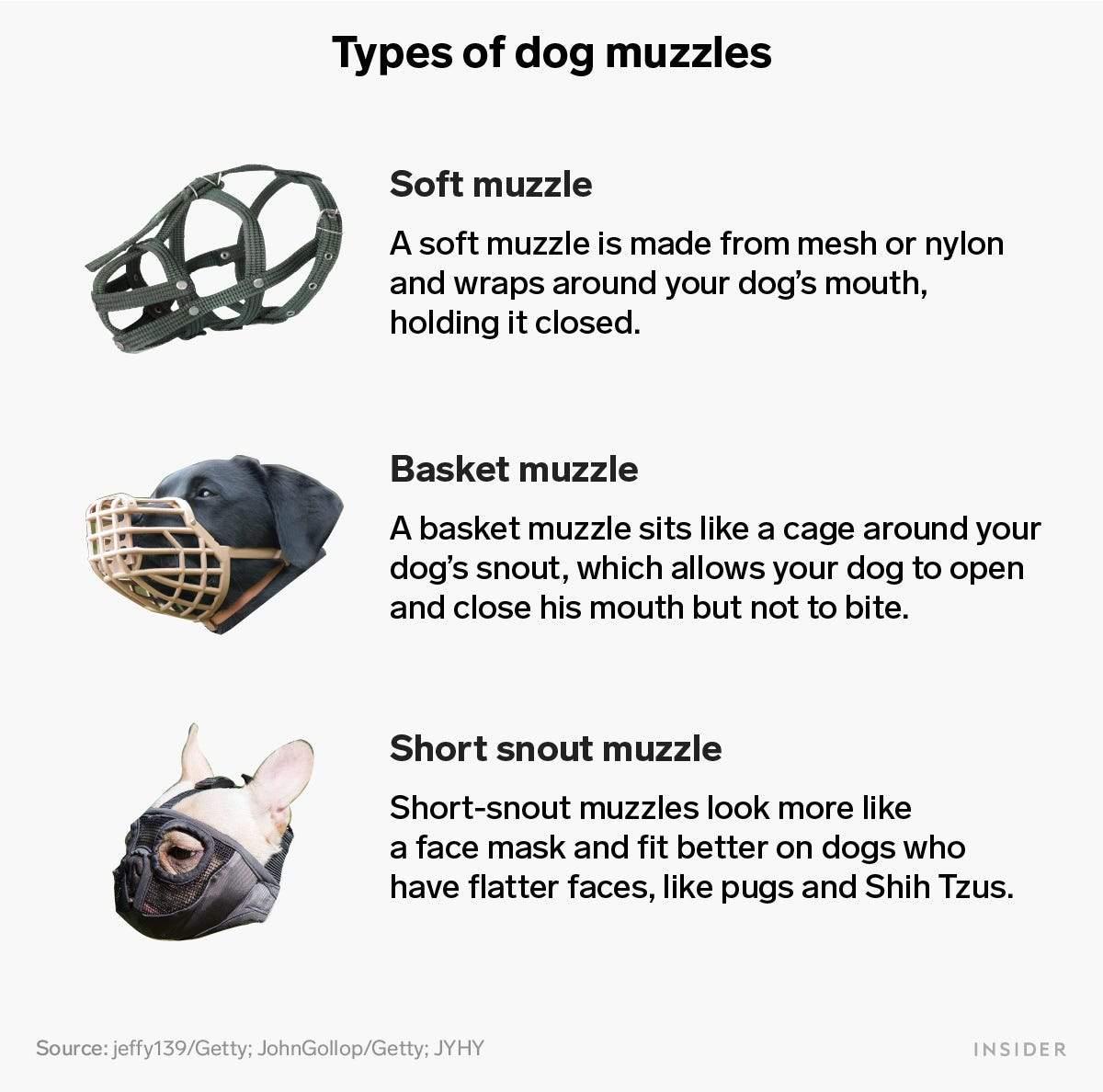6 avantages surprenants des muselières pour chiens et quel type choisir pour votre chien