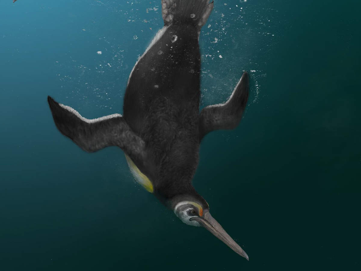 Flying penguins chilling on tropical islands may have existed before the dinosaurs went extinct