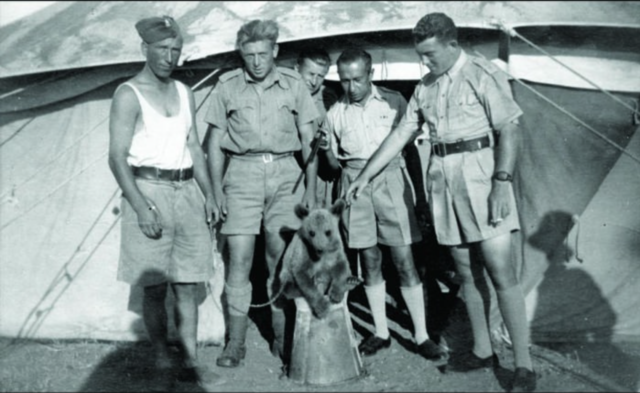 After being released from a Siberian labor camp during the Nazi invasion of Russia in 1942, the 22nd Polish Supply Brigade began a long trek south towards then-Persia. Along the way, they bought an orphaned bear.