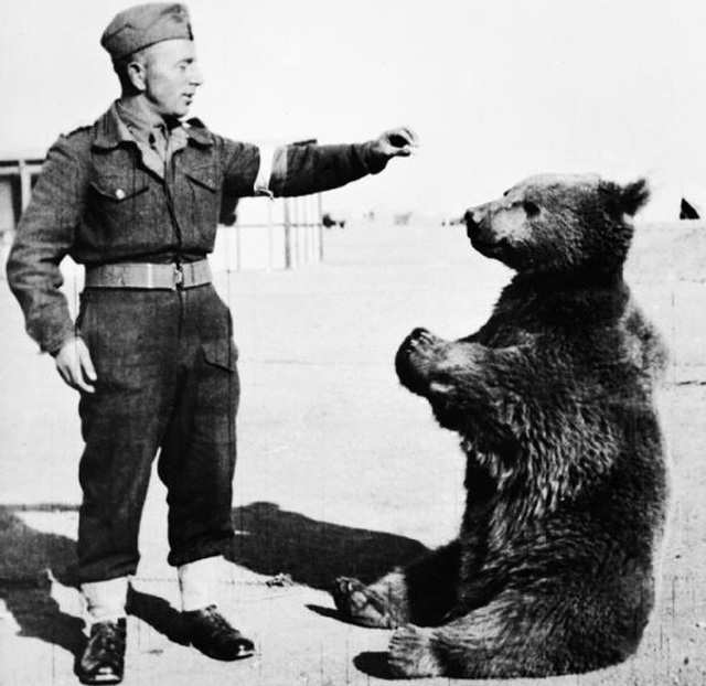 The bear became a major morale boost to the troops.