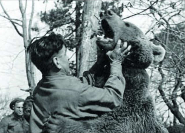 By 1943, the Polish company had reached Egypt and were preparing to reenter the war zone in Italy. The army had strict rules denying pets passage to war zones, so the company did the only thing they could — they made Wojtek an official soldier.