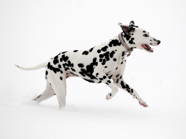 The best dog breeds for active people   Business Insider India