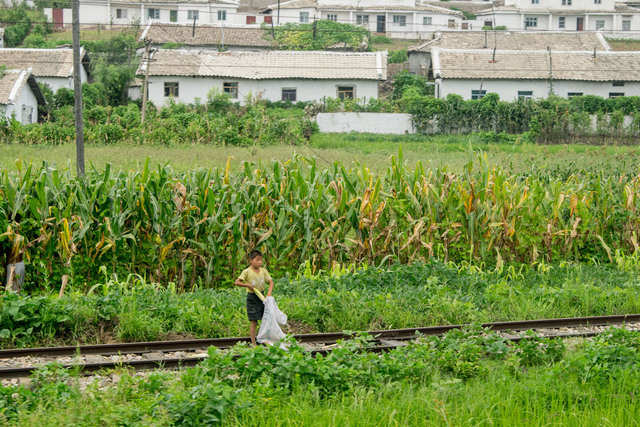 The train chugged along, giving Chu glimpses of everyday life. This boy collected corn cobs beside the tracks.