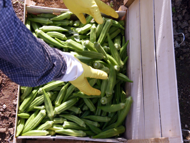 14 vegetables that are actually fruits | BusinessInsider