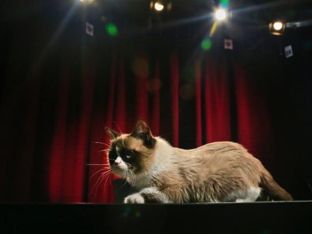 Grumpy Cat Child Leisure Cute Fashion Life T Shirt