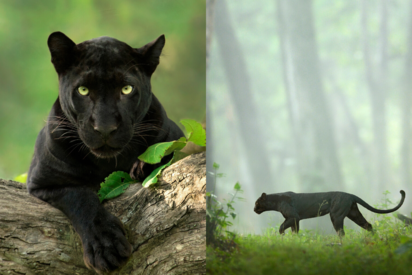 Photographer Of The Viral Black Panther Images From India Shares His Story