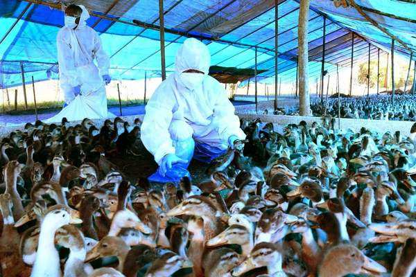 Bird flu confirmed in Kerala, Rajasthan, MP, HP, Haryana, Gujarat and UP | Business Insider India