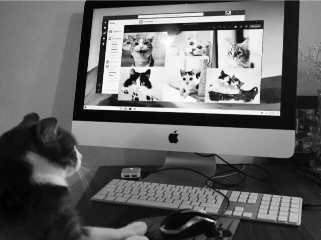 Cat lover? Here's a chance to do your favourite thing for research — watch cat videos